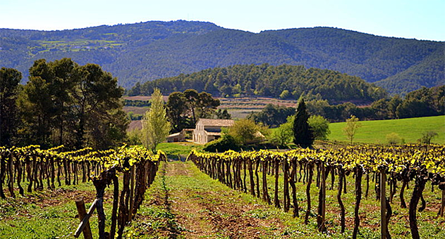 Spanish wine country.png