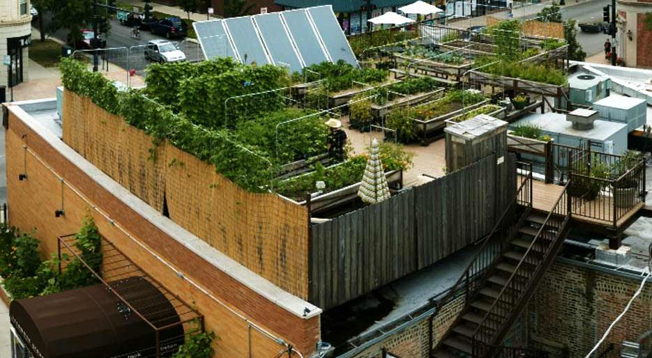 Sustainable_Restaruants_Uncommon_Ground.jpg