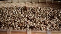 Coffee beans 198x106