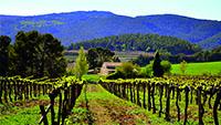 Spanish wine region